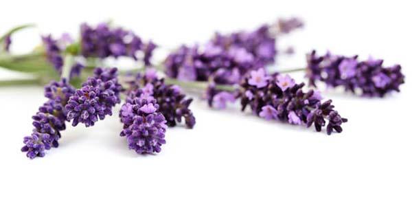 Eau florale de Lavance